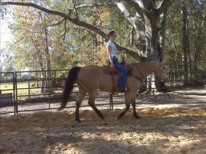 India's 1st Bridleless Lesson Nov 25, 2008